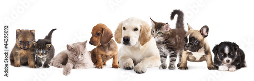 Photo sur Toile Chat Cat and dog