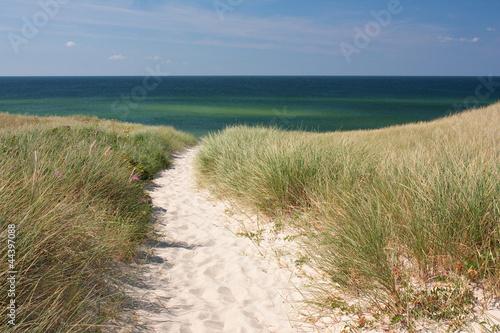 Foto-Leinwand - Weg zum Strand durch Dünen bei Kampen auf Sylt an der Nordsee
