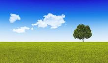 Green Tree On Green Land.