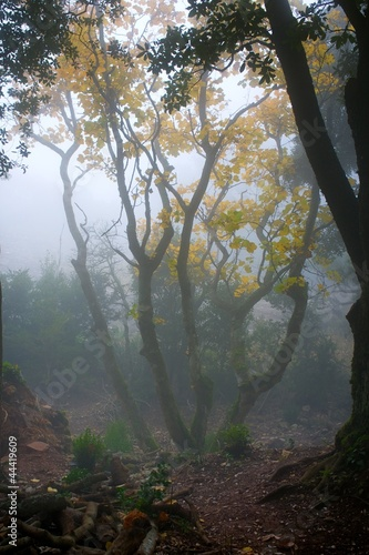 Spoed Foto op Canvas Bos in mist Fog in a forest