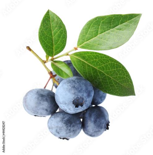 Blueberry twig Fototapet