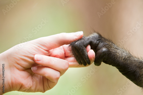 Human girl and monkey holding hands representing cooperation