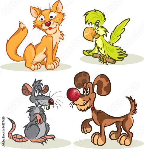 kot-pies-szczur-papuga