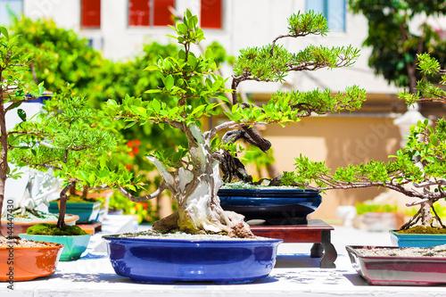 Fotobehang Bonsai Japanese bonsai trees on an exhibition