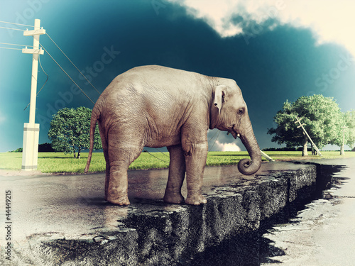 elephant on the road Canvas Print