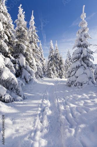 Foto-Tischdecke - Winterzeit (von Jenny Sturm)