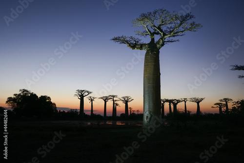 Recess Fitting Baobab baobab avenue, menabe