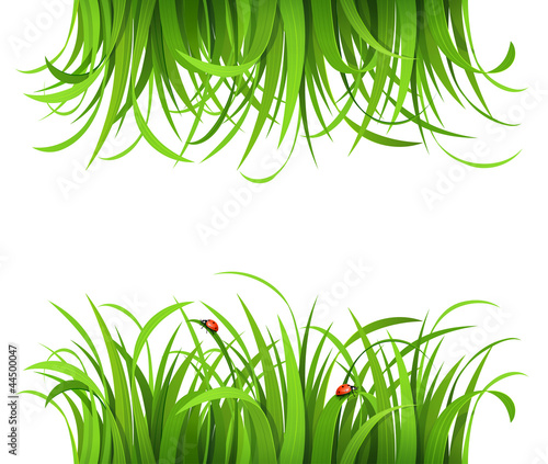 Green grass with ladybirds isolated on white