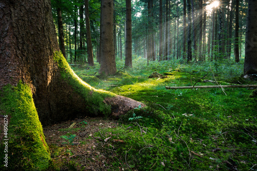 Wall Murals Forest Fairytale Forest - Ground