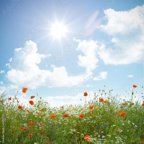 Foto-Duschvorhang - Wildblumenfeld mit Mohnblume, Kornblume und Kamille