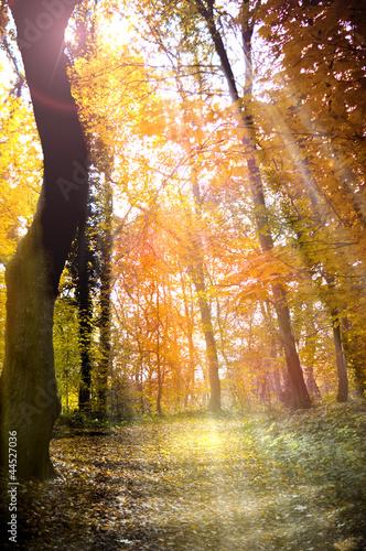 Fotorollo basic - Waldweg (von Stefan Körber)