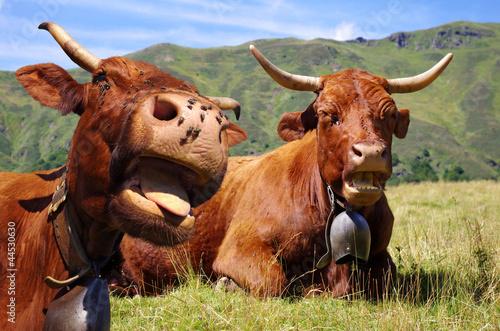 Poster de jardin Vache Humour vache
