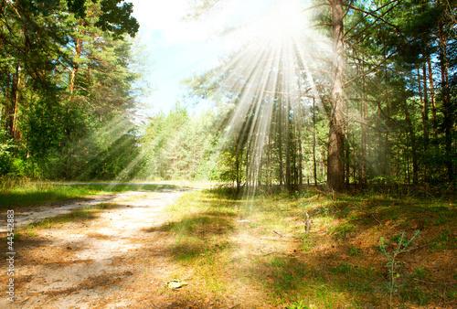 Fototapeta Forest obraz na płótnie