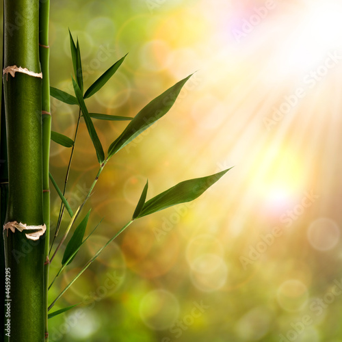 Abstract oriental backgrounds with bamboo foliage