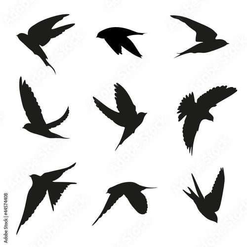Vogel Vektor Set Fototapete