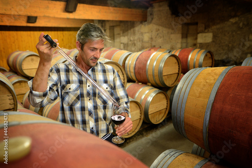 Tablou Canvas Winemaker getting sample of red wine from barrel