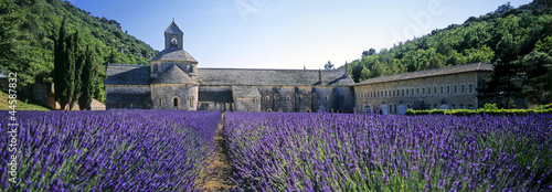 Printed kitchen splashbacks Lavender abbaye de senanque