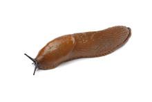 Single Slug