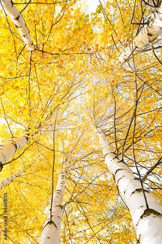 Autumn trees with yellowing leaves against the sky #44618014