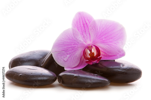 Akustikstoff - Massage Stones with Orchid