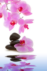 Panel Szklany Kwiaty Massage Stones with Orchid