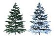 canvas print picture - 3D Tanne verschneit und ohne Schnee