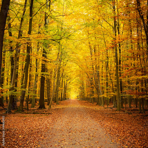 Foto op Canvas Weg in bos Autumn park