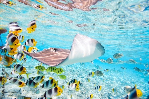 Aluminium Prints Under water Bora Bora underwater