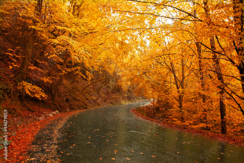 Aluminium Prints Autumn Autumn landscape with road and beautiful colored trees