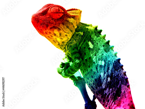 In de dag Kameleon Chamäleon Regenbogen freigestellt