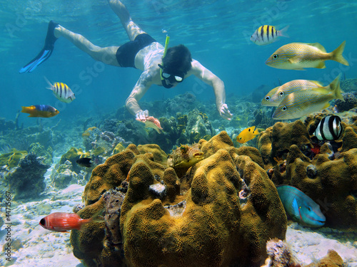 Man snorkeling underwater looks a starfish in a coral reef with tropical fish, Caribbean sea