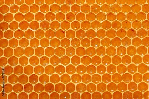Valokuva  honeycomb background