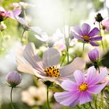Fototapeta Kwiaty - mak
