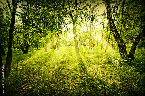 Fantasy deep forest
