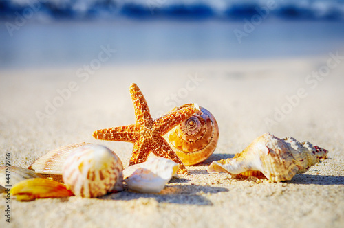 Motiv-Rollo Basic - Starfish on the Beach (von beatrice prève)