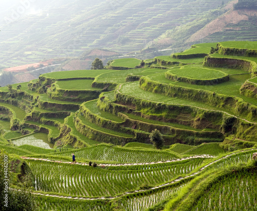 Garden Poster Rice fields Panorama image of rice terrace on the mountain at sunset.