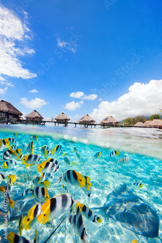 Wall Murals Under water French Polynesia