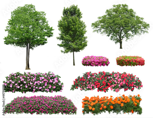 Collection plant isolated on white background Plakat