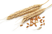 Wheat Ears With Wheat Grains Isolated On White Background