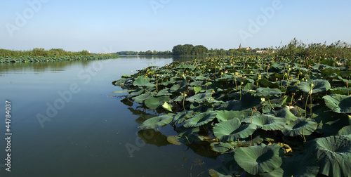 Fotografie, Obraz  fiume micio
