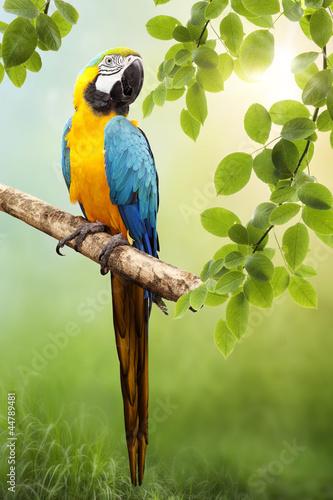 Naklejki papugi  macaw-parrot