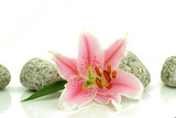 Fototapeta Kamienie - Lilia z kamieniami