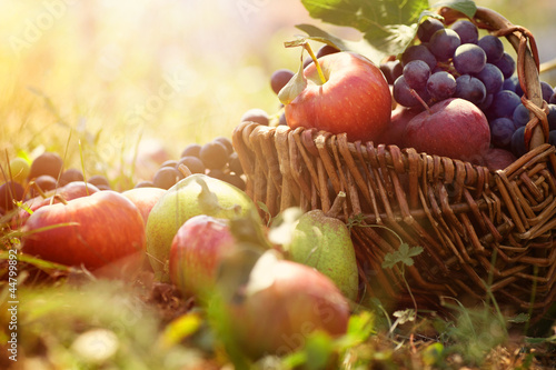 Organic fruit in summer grass