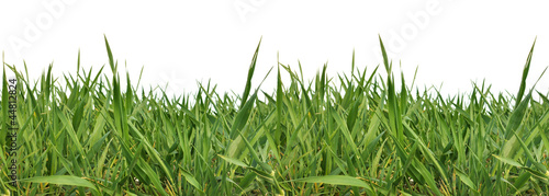 Horizontaly repeatable grass border isolated on white