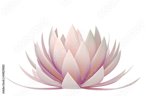 Photographie  lotus flower on a white background