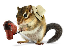 Funny Chipmunk Cowboy With Stick Horse