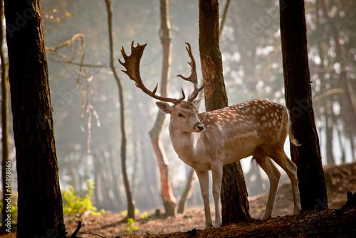 Papiers peints Cerf Wild deer in the morning
