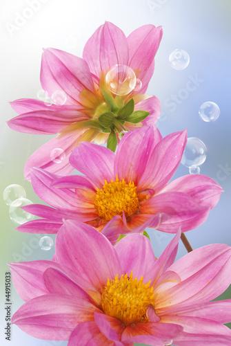 Fototapeta Holidays beautiful flower card obraz na płótnie