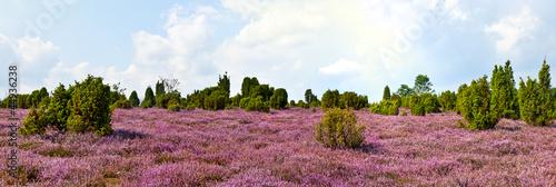 Cuadros en Lienzo Heideblüte, Panorama