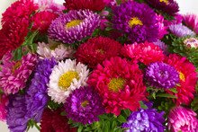 Autumn Aster Flowers Background